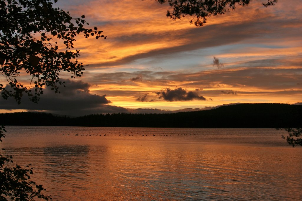 Autumn on Loch Garten