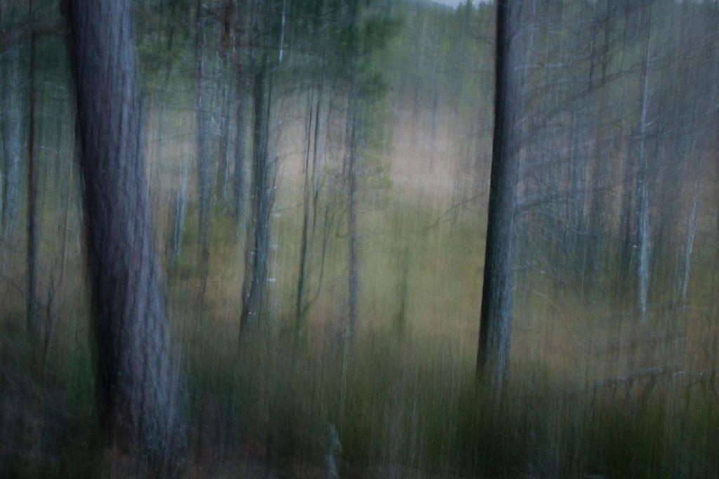 Pine Pastel