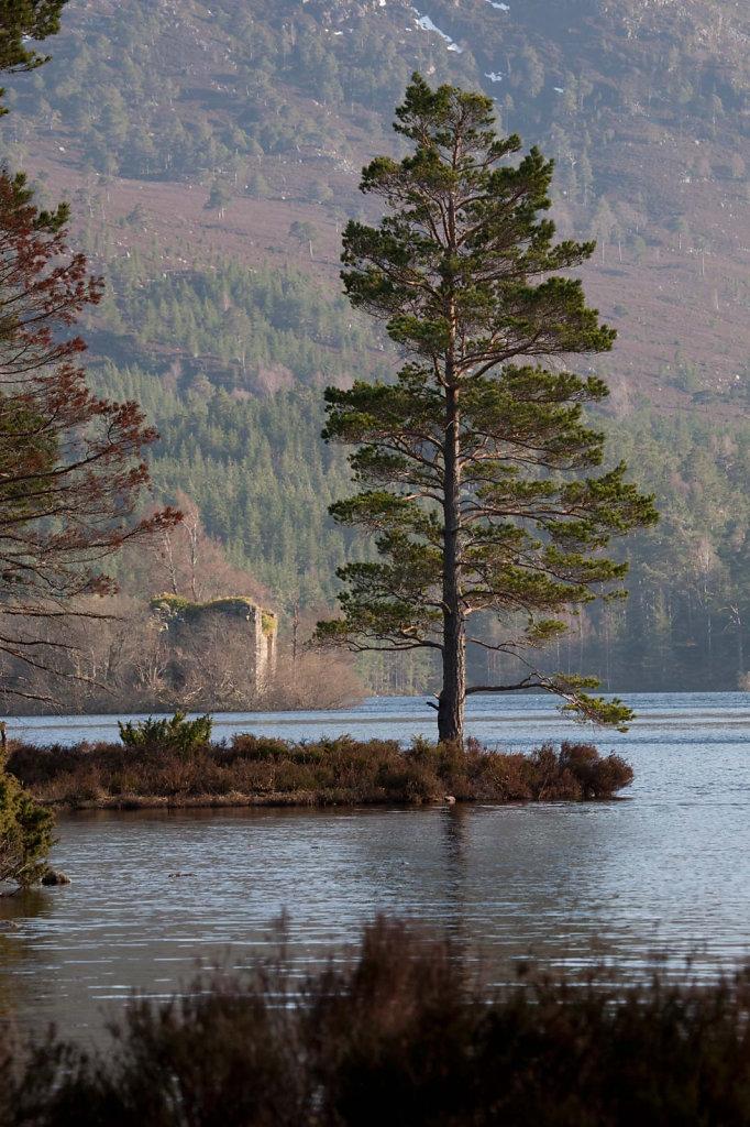 Last pine