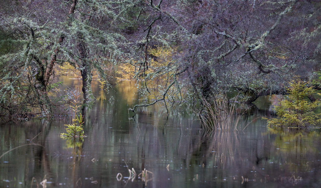 Flooded lochan